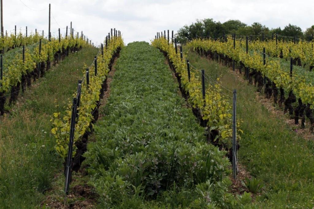 Féveroles - Domaine de Labarthe - Vin Sud-Ouest bio